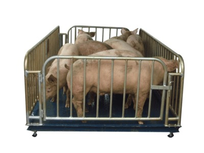 哪里有卖可以称猪称羊称牛的带围栏的电子动物秤。